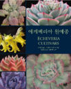Echeveria Cultivars - Korean