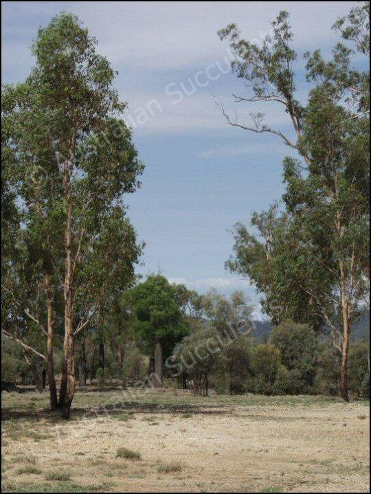 australian native plants, fire